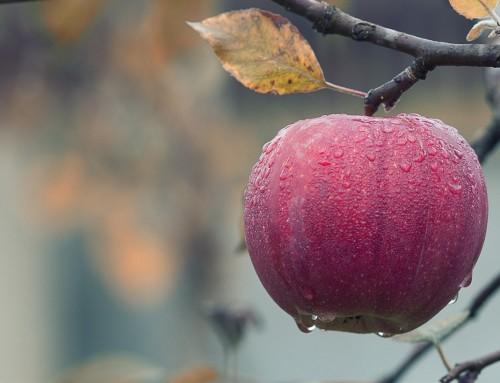 Apple Keynote am 12. September: Wie heißen die neuen iPhones?